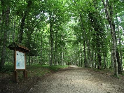 foto foresta umbria